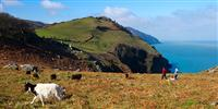 People walking on hill side, costal view, sea and goats Somerset
