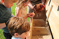 he children will love collecting the chicken eggs
