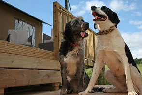 Dogs can come glamping on our sites