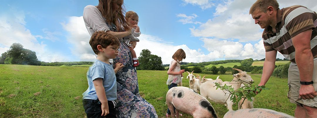 Kids and parents feeding wild goats and pigs in Kittisford