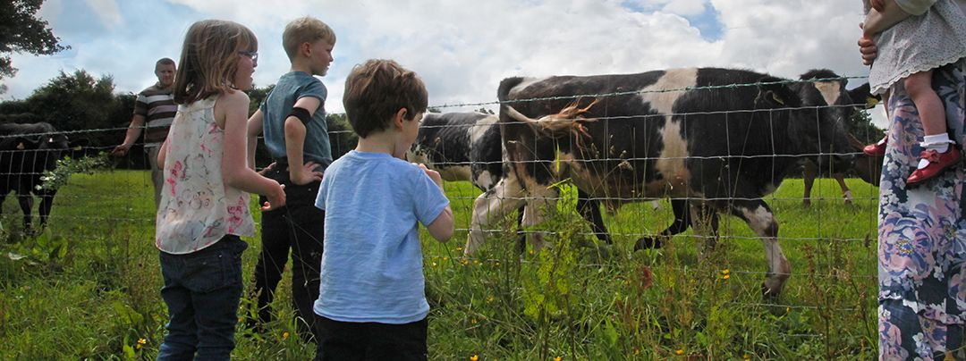 Children watching cows on the fields in Kittisford